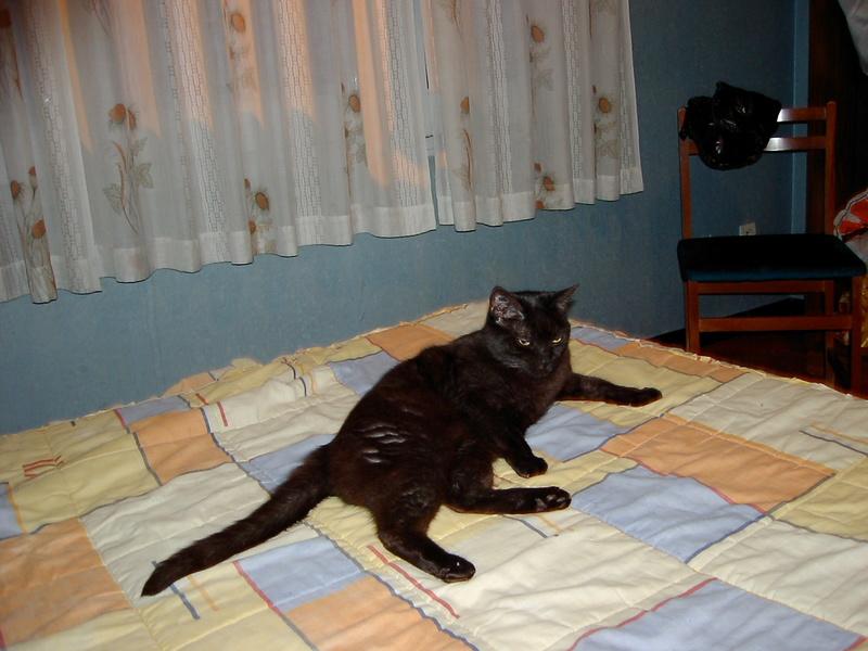 Cherche radiesthésiste, communicatrice animalier Sany0019