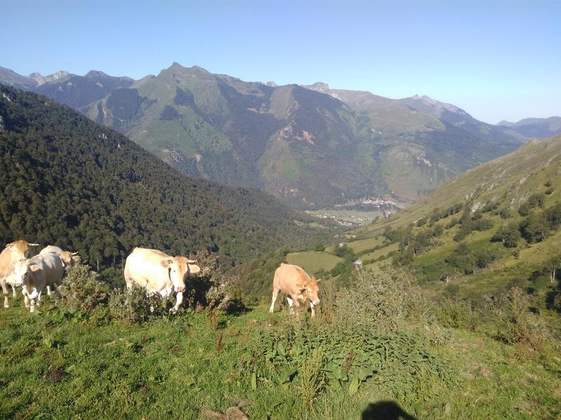 Vallée d'Ossau (64) Img_2032