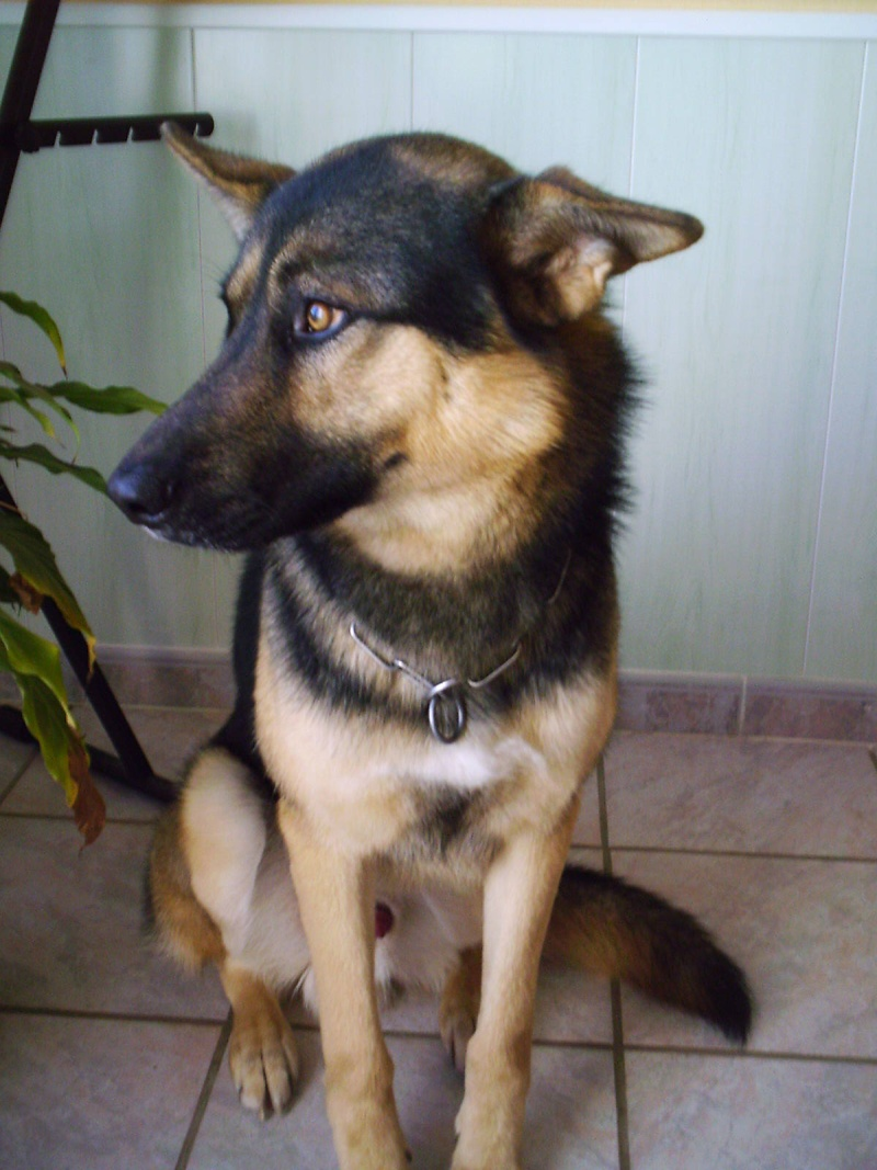 Mon chien seyard Imag0014
