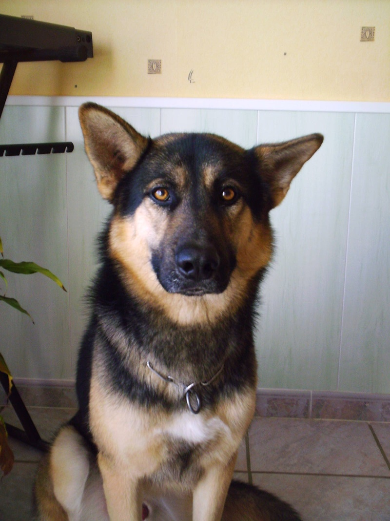 Mon chien seyard Imag0015