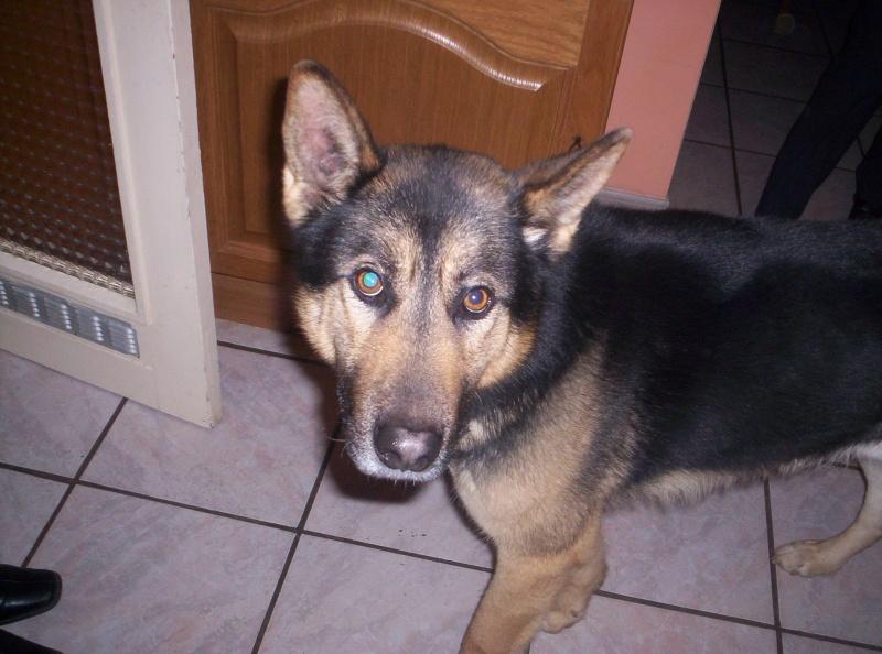 Mon chien seyard Photo_11