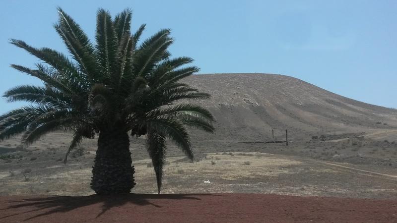 Graines de palmiers à identifier  20160612