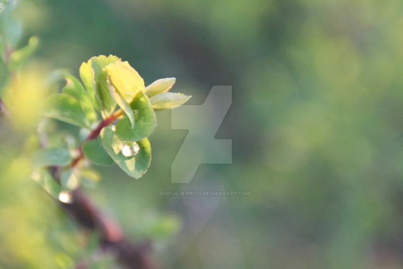 Belle nature et êtres vivants Fragil10