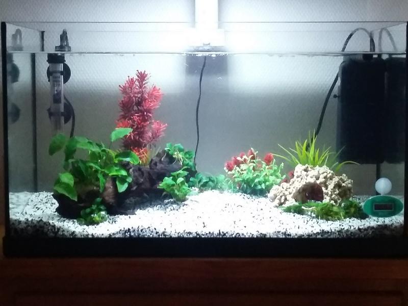 54L eau douce, 1ère semaine Aqua_b10