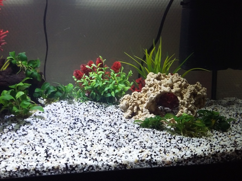 54L eau douce, 1ère semaine Aqua_p10