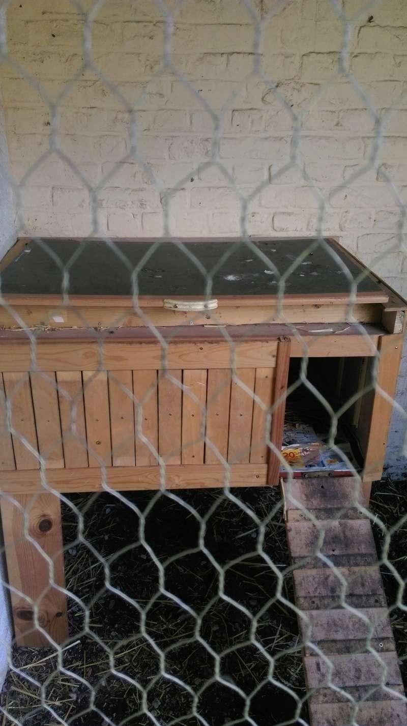 Mes poules ne rentrent plus Poulai10