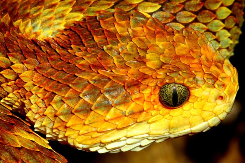 Serpent :) Image41
