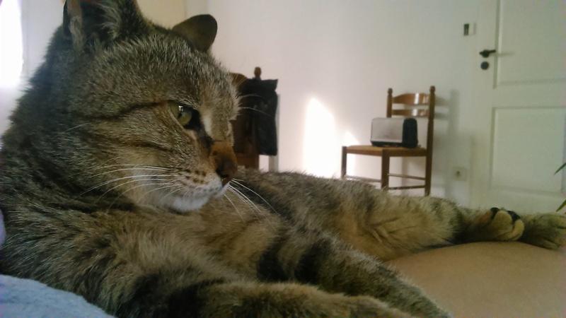 Helza, femelle Euro tabby fauve, née en 2012 Dsc_0012