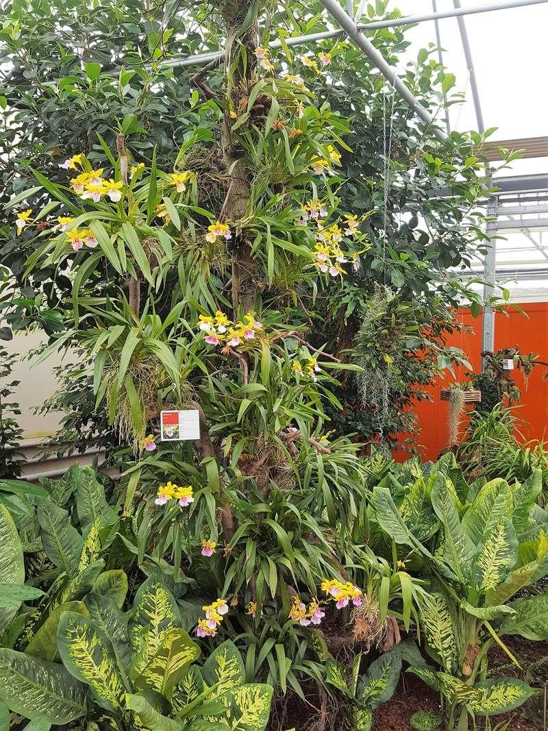Raffeiner Orchideenwelt in Südtirol 20160728