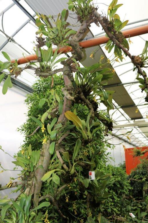 Raffeiner Orchideenwelt in Südtirol Img_4610