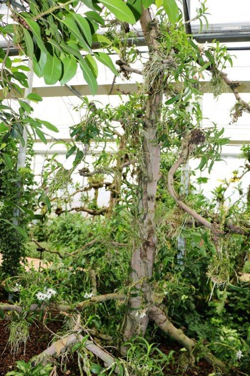 Raffeiner Orchideenwelt in Südtirol Img_4611