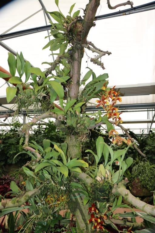 Raffeiner Orchideenwelt in Südtirol Img_4614