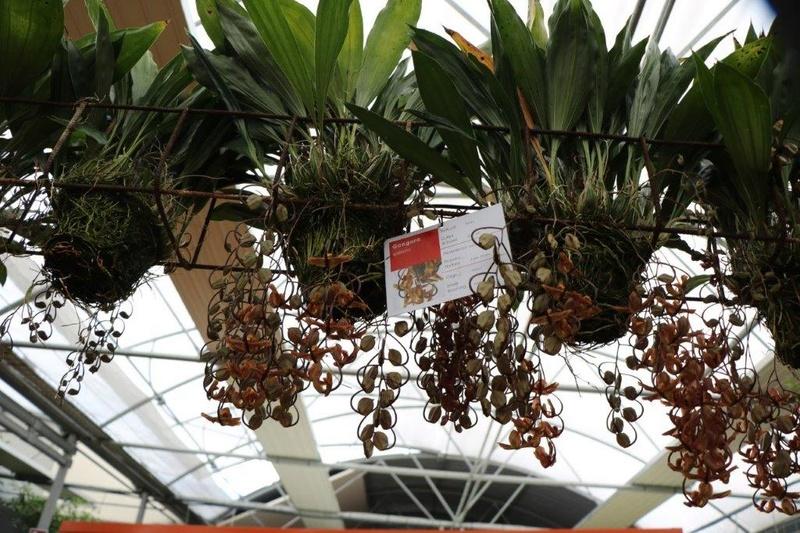 Raffeiner Orchideenwelt in Südtirol Img_4718