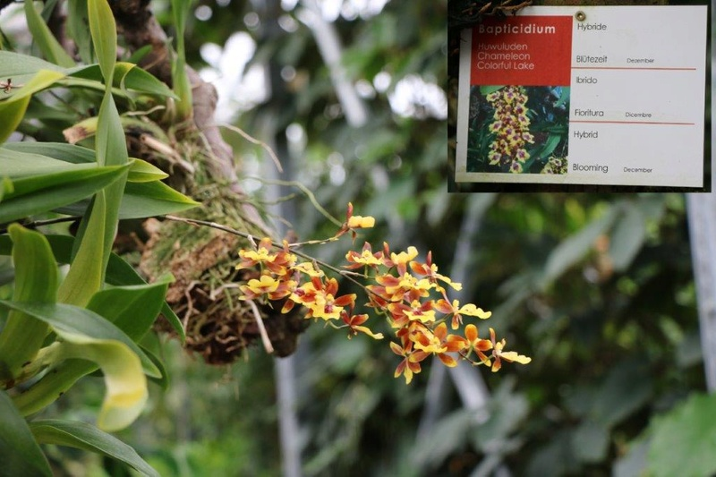 Raffeiner Orchideenwelt in Südtirol Img_4720