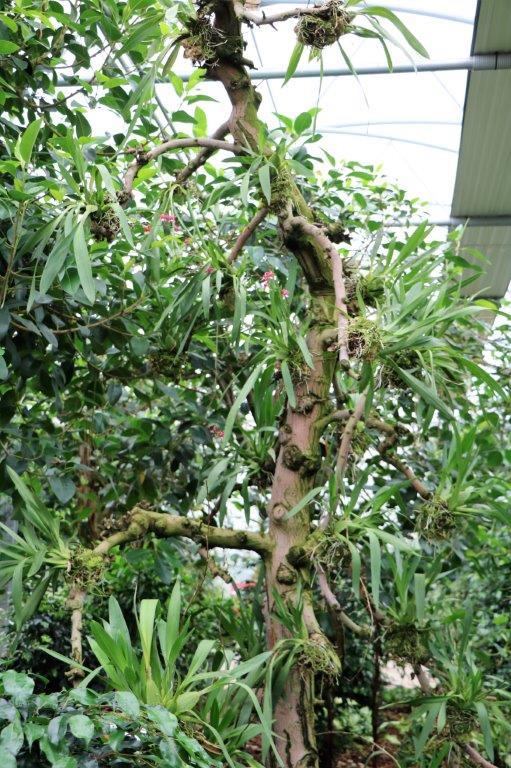 Raffeiner Orchideenwelt in Südtirol Img_4810