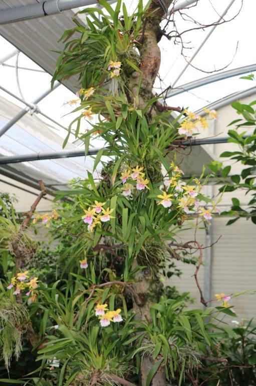 Raffeiner Orchideenwelt in Südtirol Img_4811