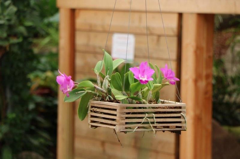 Raffeiner Orchideenwelt in Südtirol Img_4812