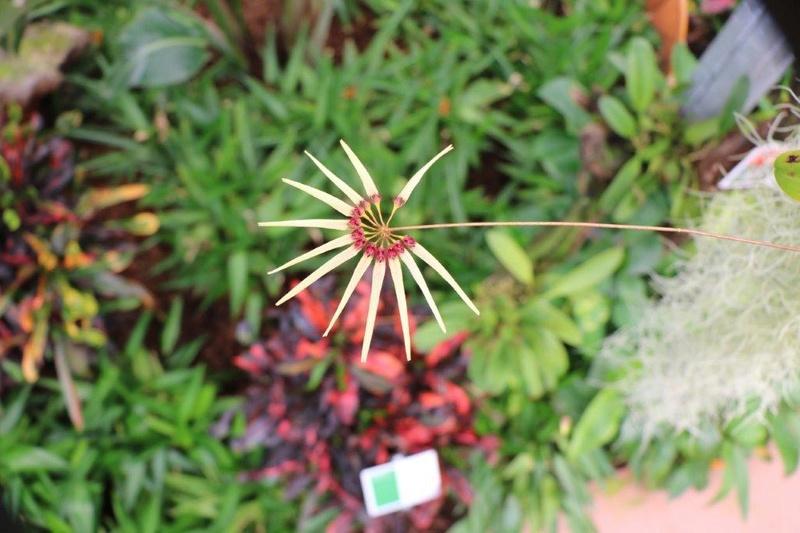 Raffeiner Orchideenwelt in Südtirol Img_4814