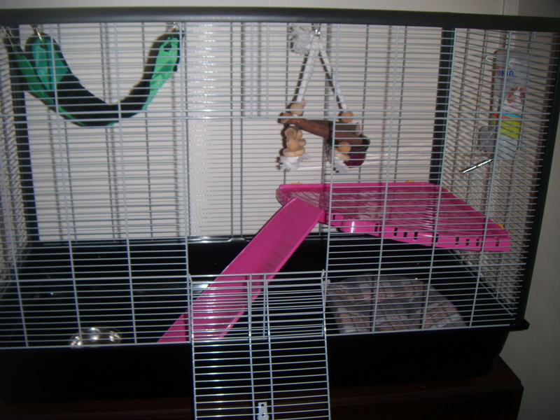 Cage pour mes petits filles Dscf1113