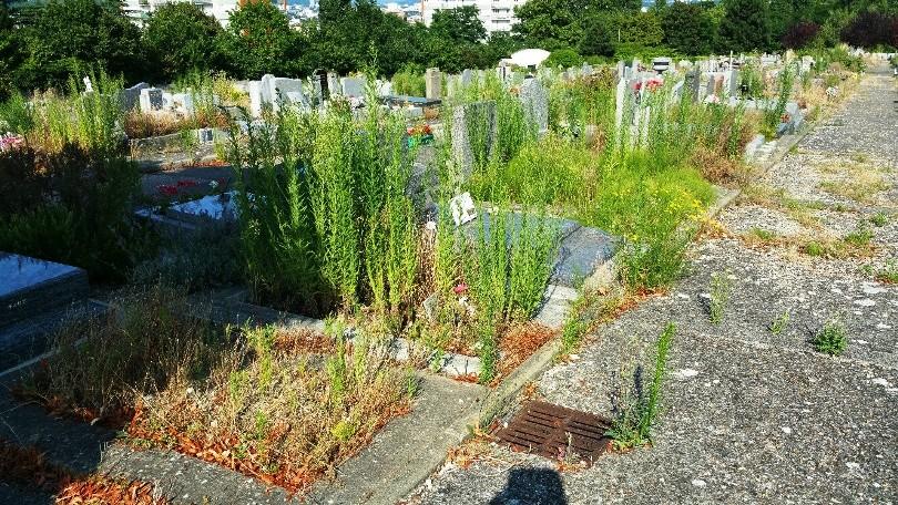 Le cimetière et les herbes sauvages Cimeti10