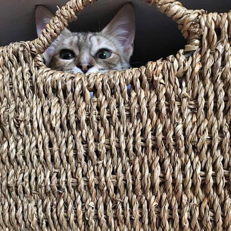 margotte - MARGOTTE, chatonne tigrée et rousse, née le 05.04.16 Image17