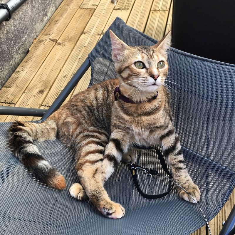 margotte - MARGOTTE, chatonne tigrée et rousse, née le 05.04.16 Image19
