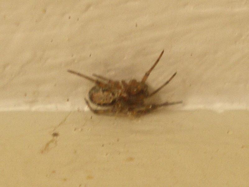 Araignée au plafond Araign10