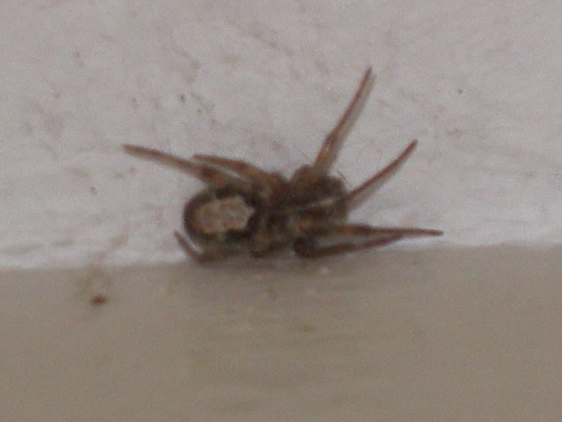 Araignée au plafond Araign12
