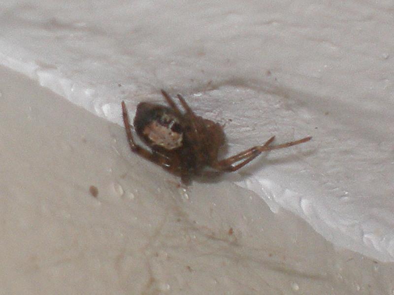 Araignée au plafond Araign13
