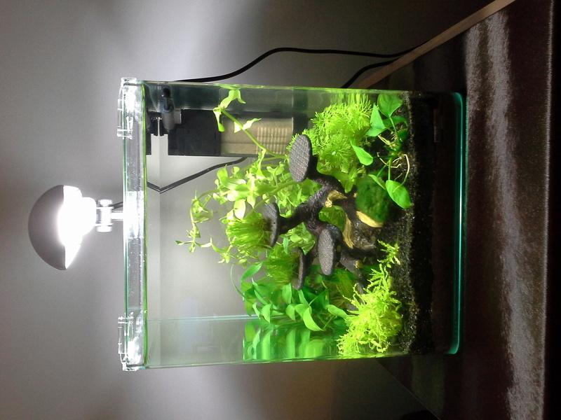 Choix d'un aquarium 20160714