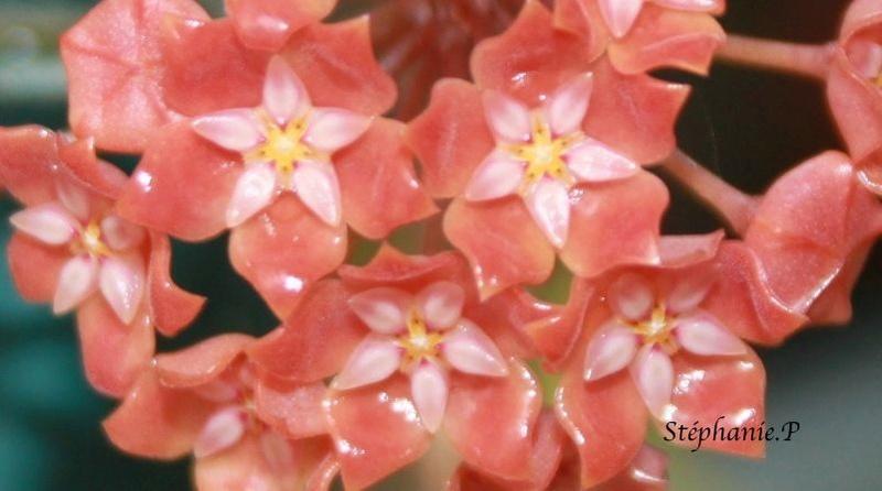 Floraison du jour  Img_0519