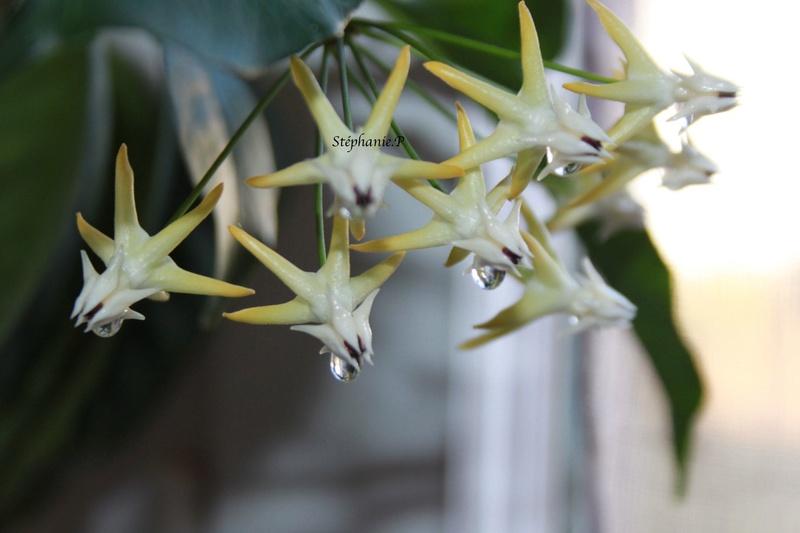 Floraisons Img_0627