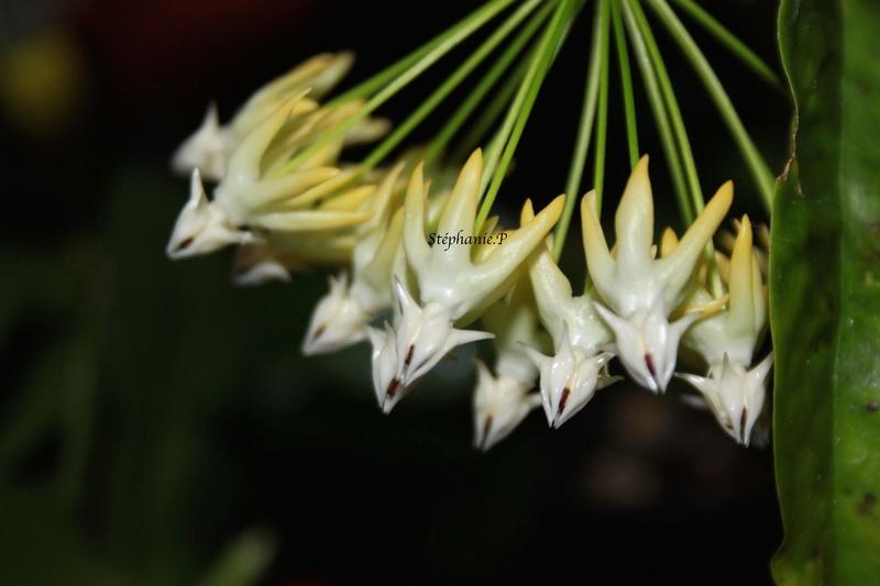 Floraisons Img_0712
