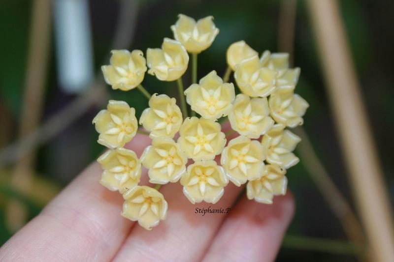 Floraison du jour  Img_0720