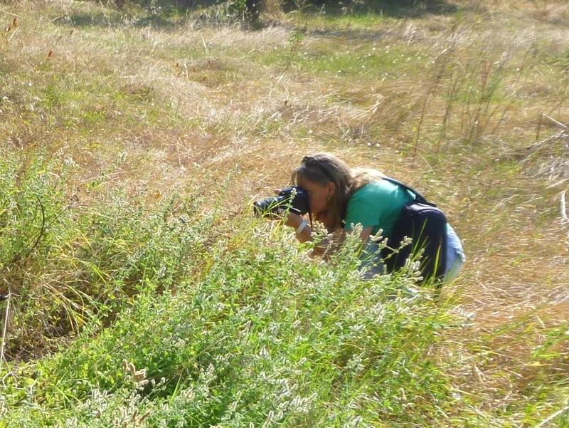 Mini rencontre Spipoll à Uzès le 17 juin : compte rendu Photo010