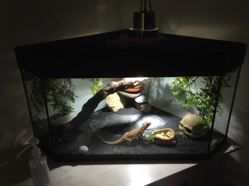 Aquarium Image10
