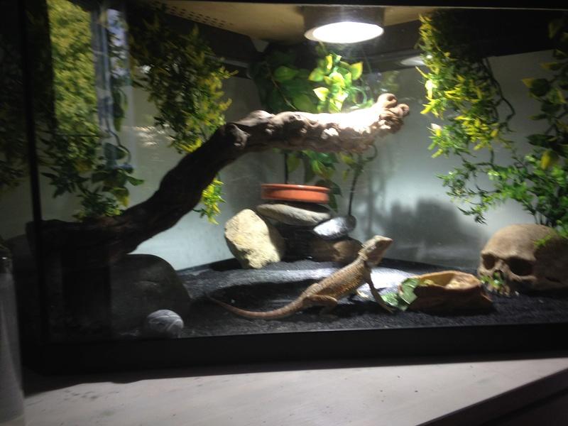 Aquarium Image11