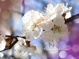 СМОКОВНИЦА МОЛИТВЫ! стихи о Духе Святом, ХВЕ Photo110