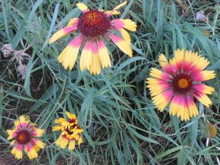 Les plantes des ami(e)s - Page 4 Dscn4023