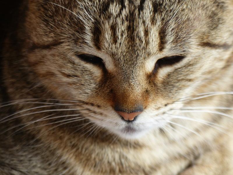 Les chats sont-ils possédés ?  P1040310