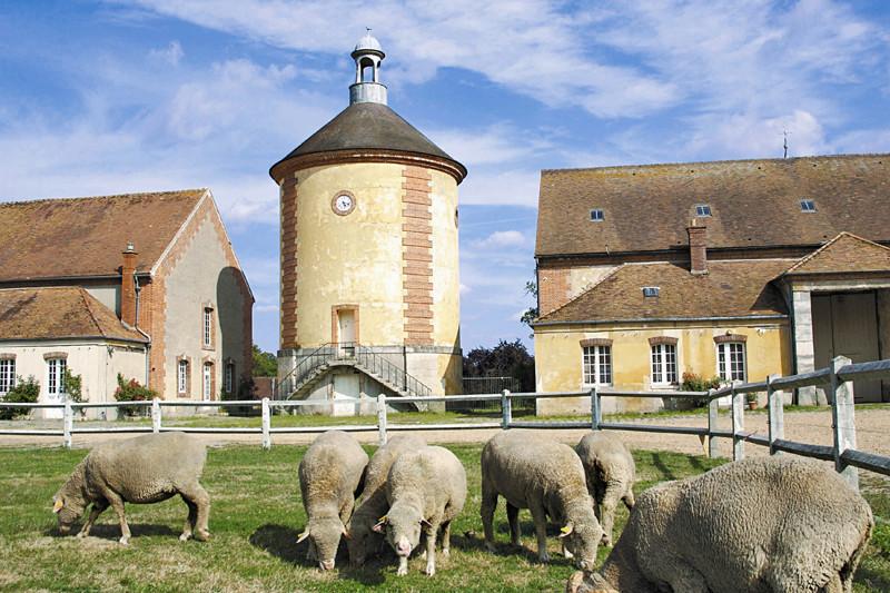 La Bergerie royale de Rambouillet Le-pig10