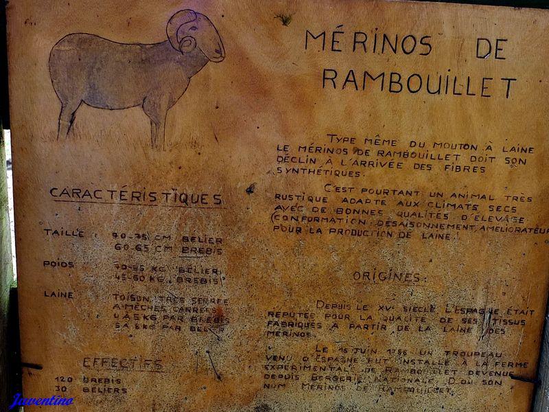 La Bergerie royale de Rambouillet Merino10