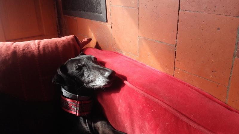 Raul ( Moro) galgo noir Adopté - Page 2 20160712