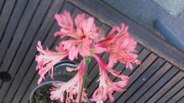 Kübelpflanzen - Seite 2 20150810