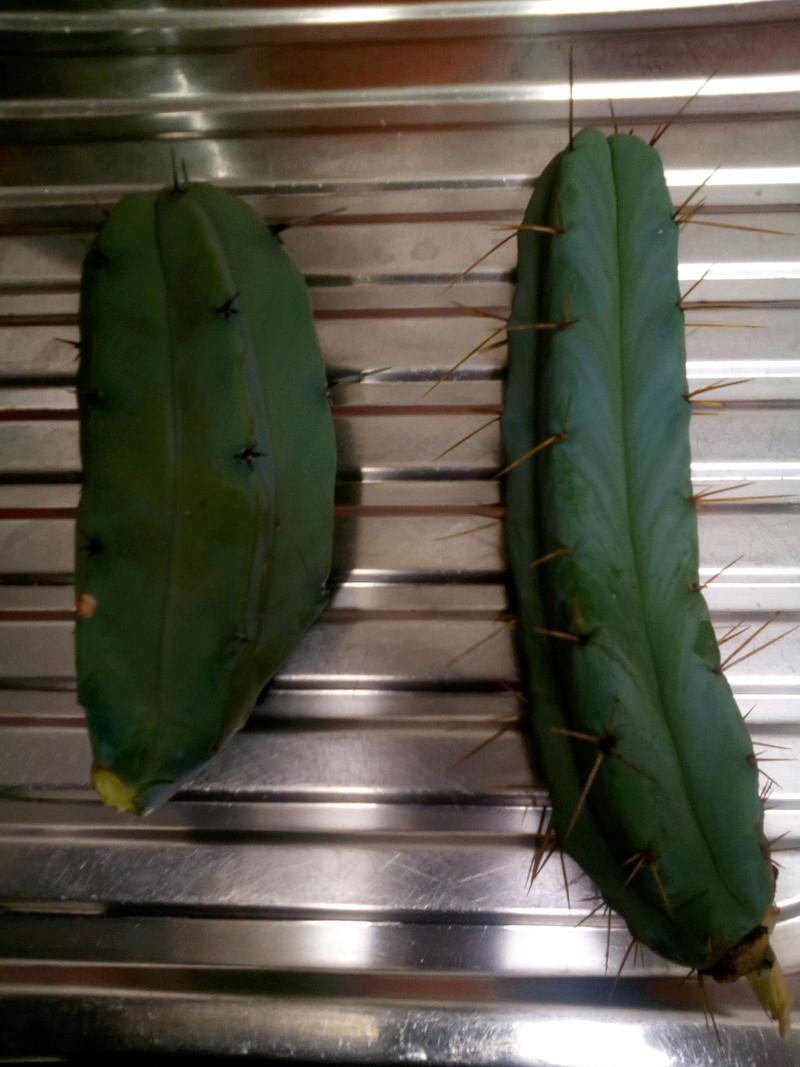 cactus Id :+) Img_2012