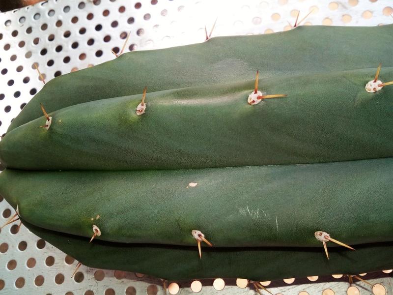 cactus Id :+) Img_2014