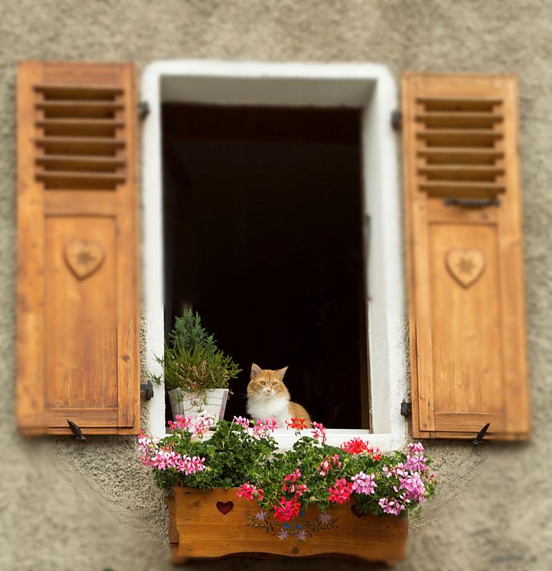 le chat qui me regarde Chatel14