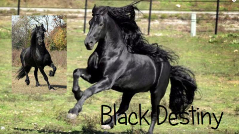 Chevaux de Gabrièle R. Black_10