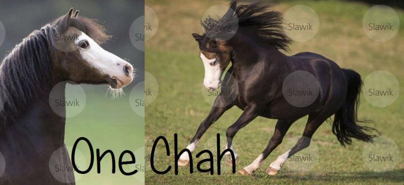Les chevaux de Maxence B. One_ch10