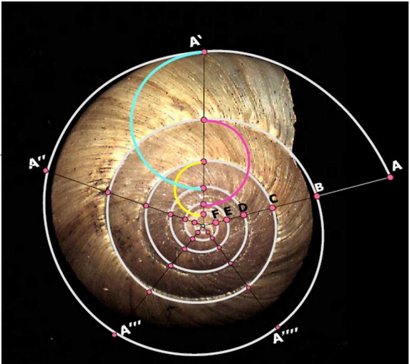 Géométrie Sacrée K8fjea10